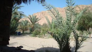 Sinai oasis