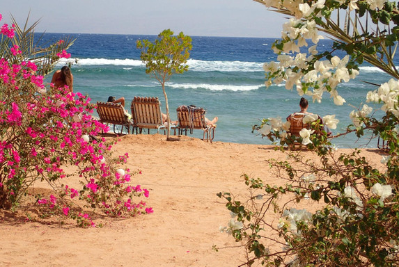 Bedouin star beach full with flowers and trees, great colors with the red sea