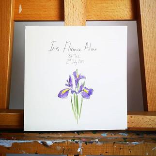 A stunning iris flower, perfectly drawn