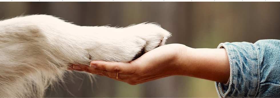 Ways to give and support animals at Rural Animal Rescue Effort (RARE)
