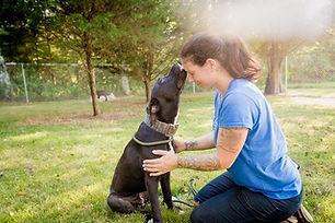 Grateful dog rescued by Rural Animal Res