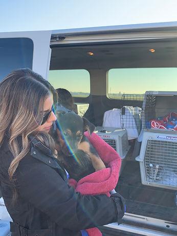 Volunteer to transport animals for Rural Animal Rescue Effort (RARE)