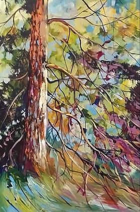 Pine in Colour 24x36