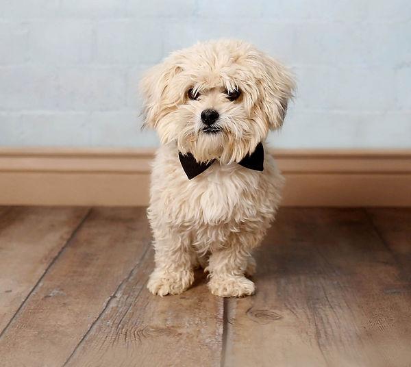 Puppy30.jpg