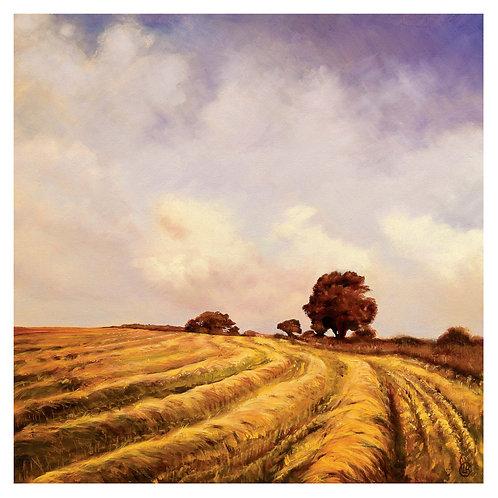 Cleddau Barleyfield #3 - Signed Print