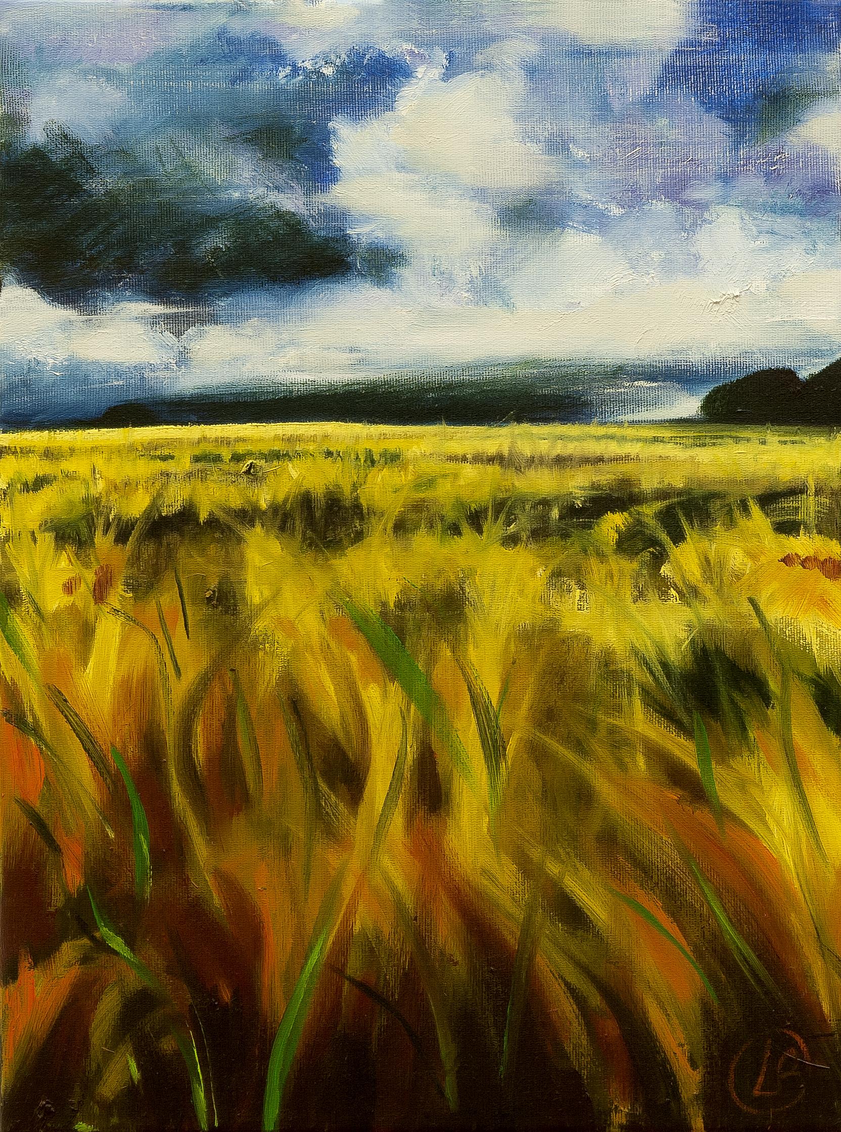 Cleddau Barleyfield #1