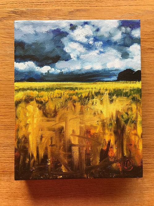 Cleddau Barleyfield #2, 2017