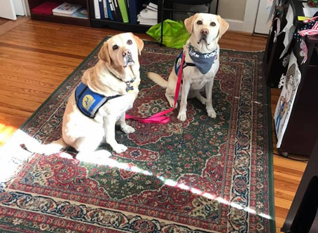 Ashley's Place Support Dog Ophira has a Playdate