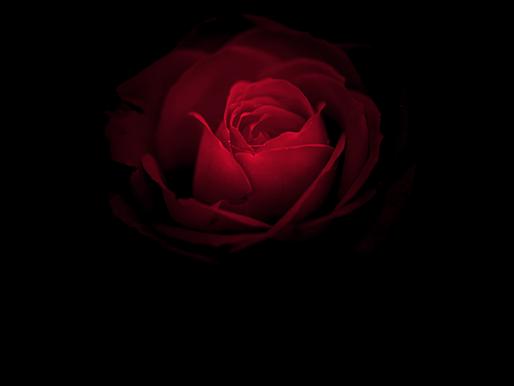 L'amour obscure défini - Janine Ma-ree