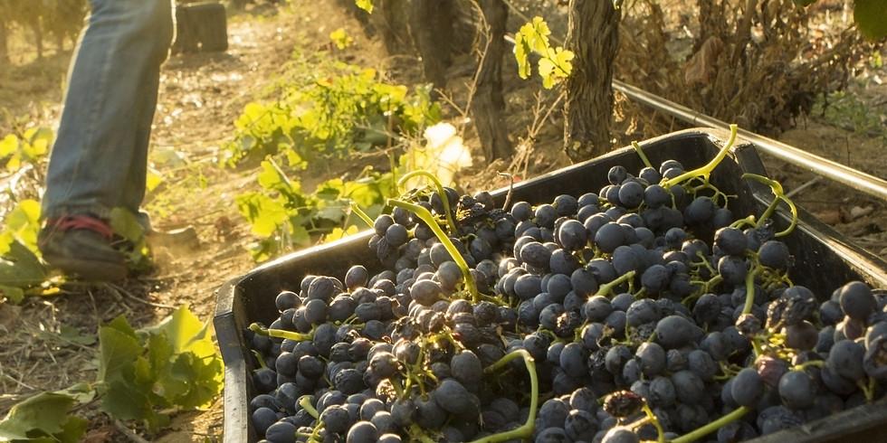 風土與葡萄酒釀造學