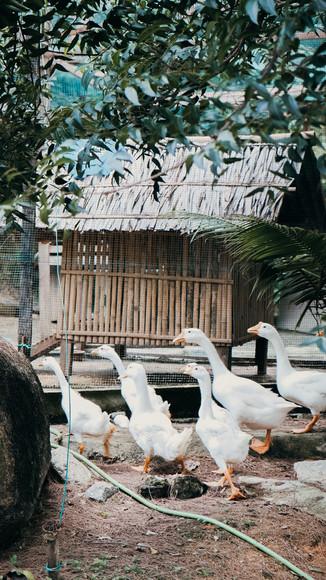 Goose pets near Woodhouse