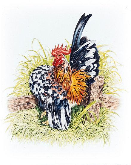At Peace -- Serama Chicken