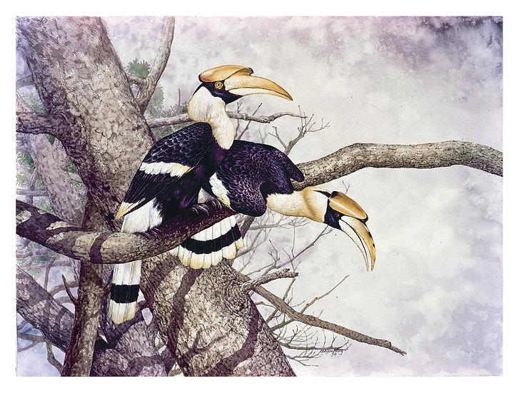 Natural Bond 7 -- Great Hornbill