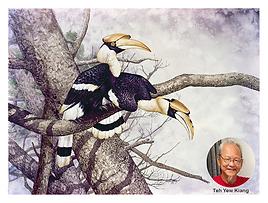 Great Hornbill + TYK.png