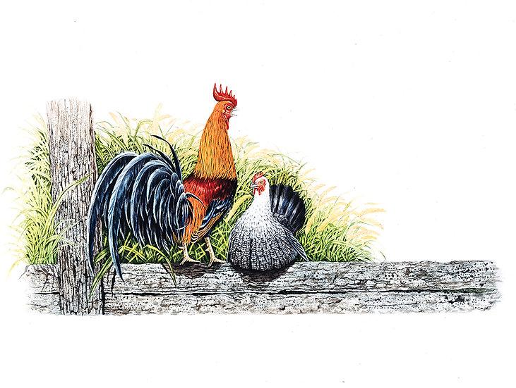 You & Me -- Bantam Chicken