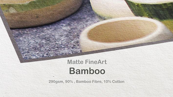 Bamboo web icon.jpg