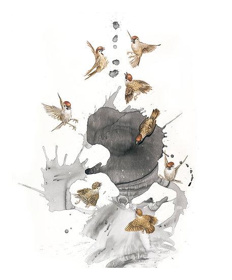 Splash -- Eurasian Tree-sparrow