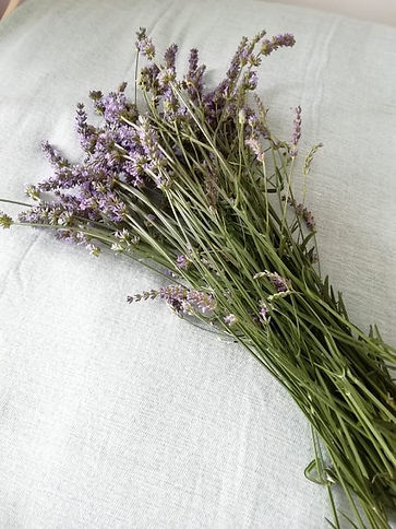 Lavender Aromatherapy Massage Holistic Treatment Therapy Complimentary Health Wellbeing Mollie Florence Holistics
