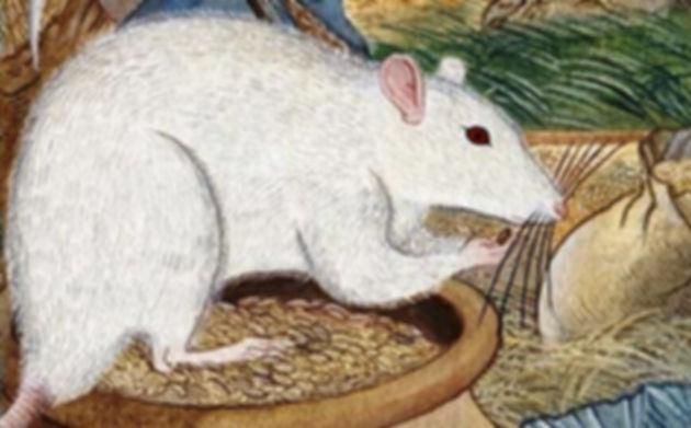 Ratón guía -cuento sufí de Rumí Camino Conciencia