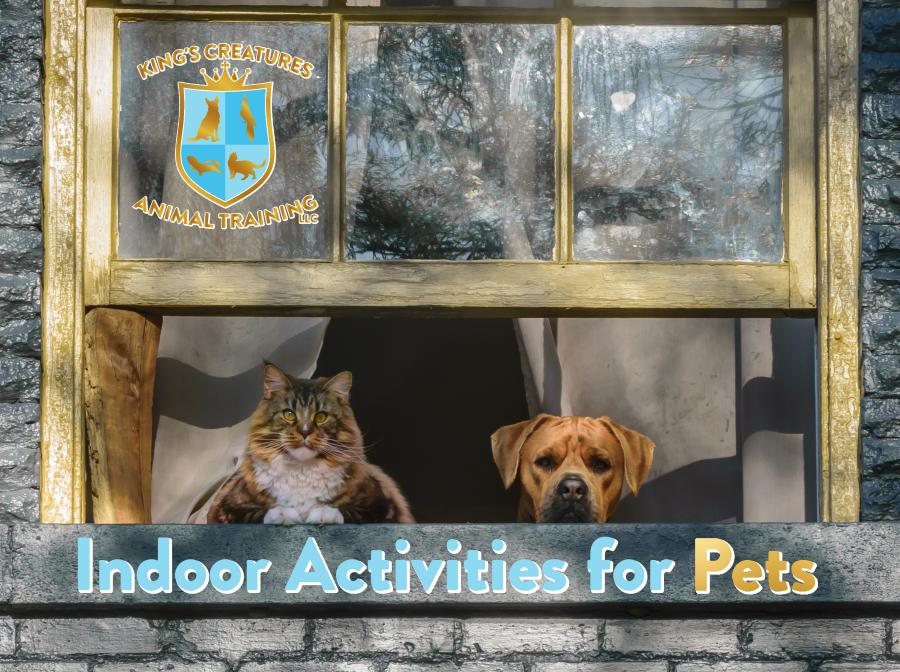 Dog Training Cedar Rapids, Pet Training Cedar Rapids, Cat Training Cedar Rapids, Indoor Activities for Dogs, Indoor Activities for Cats, Maine Coon, Dog