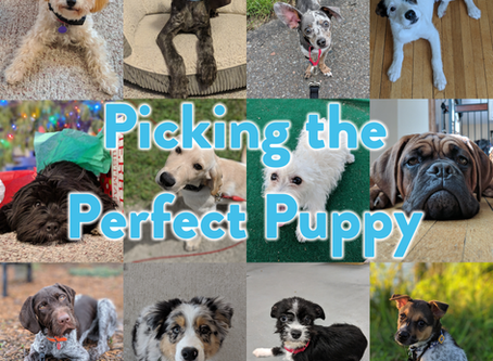 Puppies: Picking the Perfect Pup