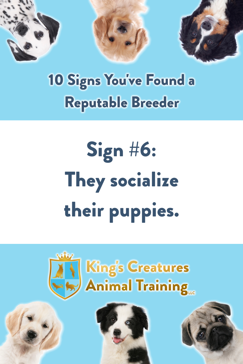 Dog Training Cedar Rapids, Reputable Breeder, Puppy, Find a Puppy, Breeder, Dog Trainer, King's Creatures Animal Training LLC
