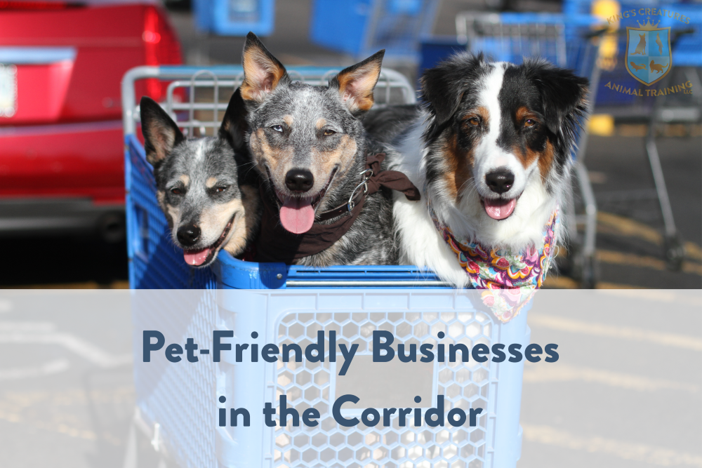 Dog Training Cedar Rapids, Pet Friendly Businesses in the Corridor, 3 dogs in a cart