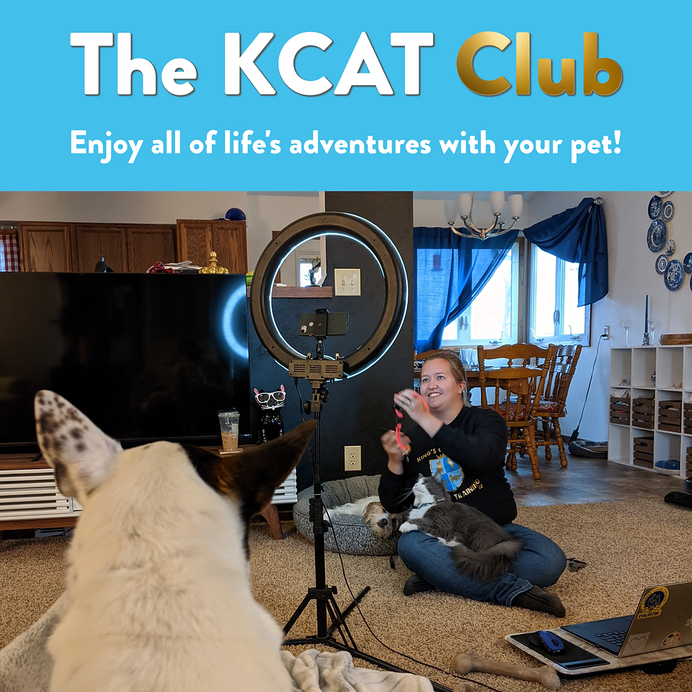 Laura records a live video with one cat and two dogs, I want to Join the Club button, Online Pet Training, Online Dog Training, Online Cat Training, Adventure Cat, Adventure Dog, Dog Training, Cat Training, KCAT Club