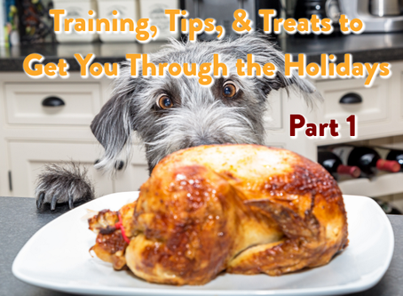 Training, Tips, & Treats to Get You Through the Holiday Season: Part 1