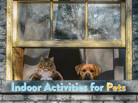 Indoor Activities for Pets