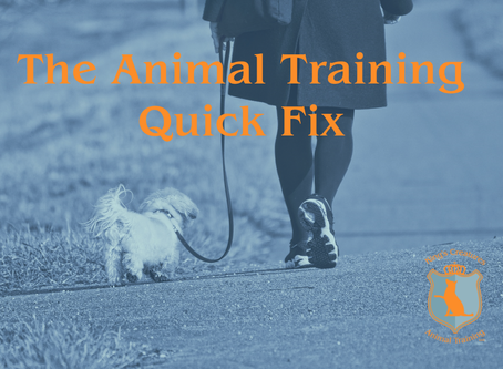 The Animal Training Quick Fix