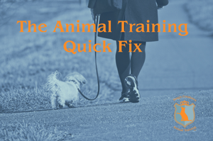 Waist down image of woman walking her small fluffy dog on a loose leash. They are walking along a paved path in a field of grass. Title in Orange over the picture: The Animal Training Quick Fix. King's Creatures Animal logo in bottom right corner.