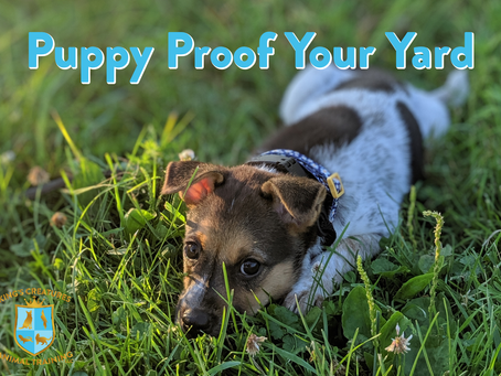 Puppy Proof Your Yard