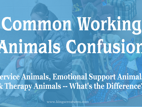 Common Working Animals Confusion