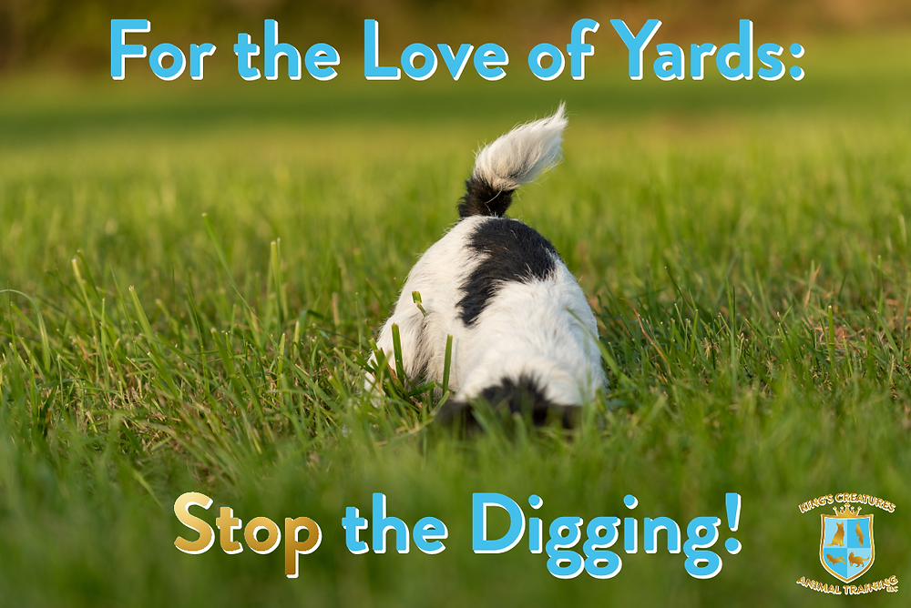 Dog Training Cedar Rapids, Pet Training Cedar Rapids, Digging Dogs, Stop Digging Dogs