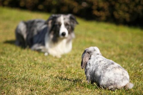 Dog Training Cedar Rapids, Pet Training Cedar Rapids, Digging Dogs, Stop digging dog, rabbit, Aussie