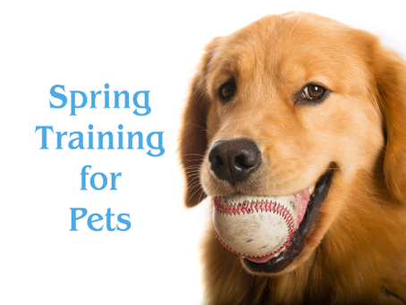 Spring Training for Pets