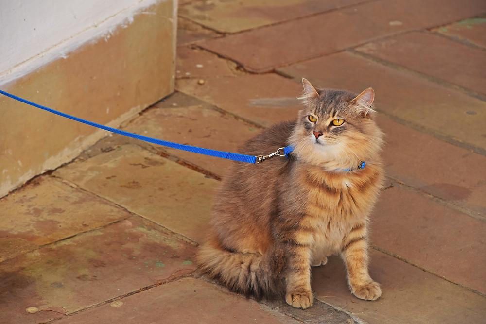Dog Training Cedar Rapids, Pet Training Cedar Rapids, Cat Training Cedar Rapids, Indoor Activities for Dogs, Indoor Activities for Cats, Cat Leash Walking