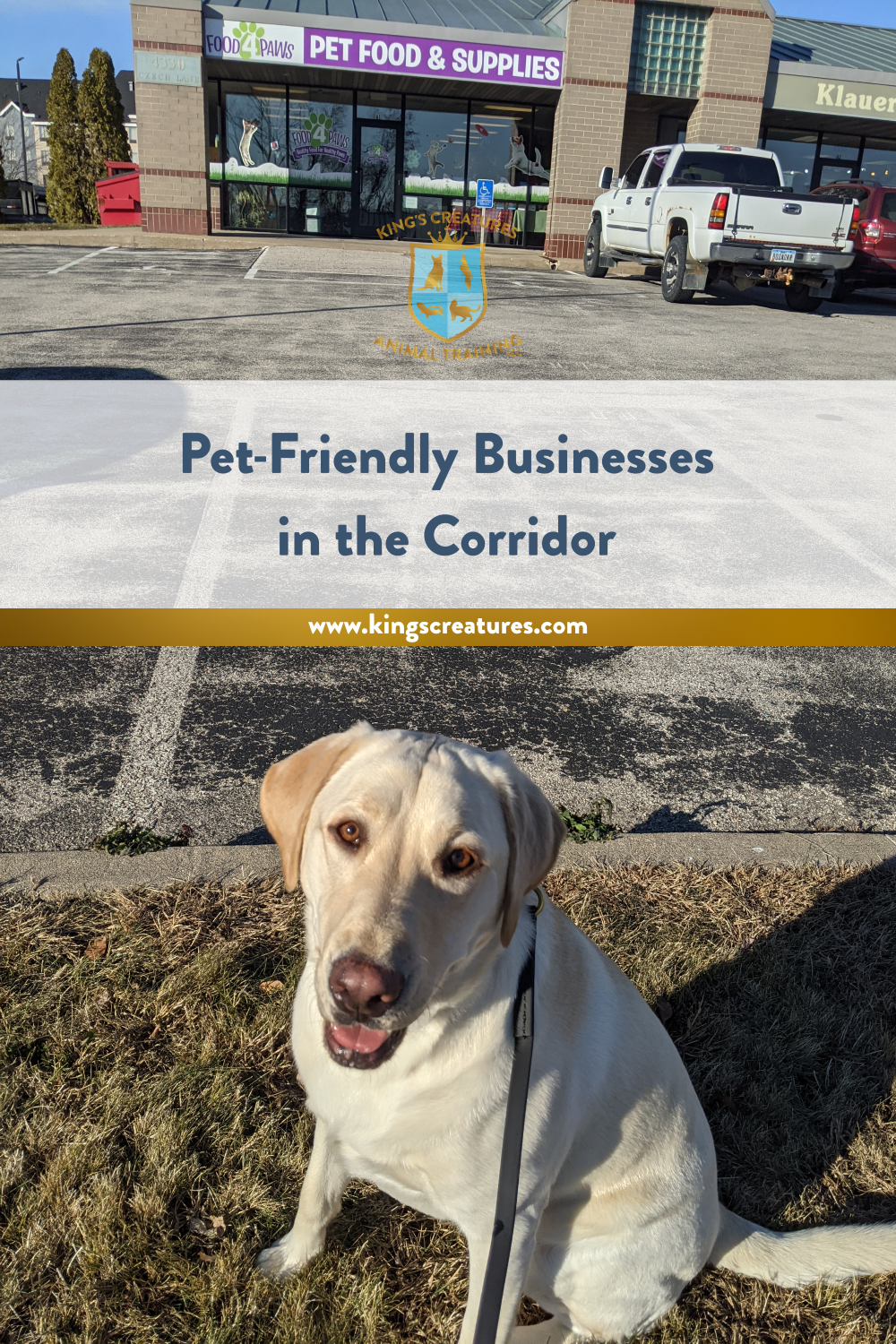 Food 4 Paws, Pet Friendly Business, Dog Training Cedar Rapids, yellow lab sits outside Food 4 Paws