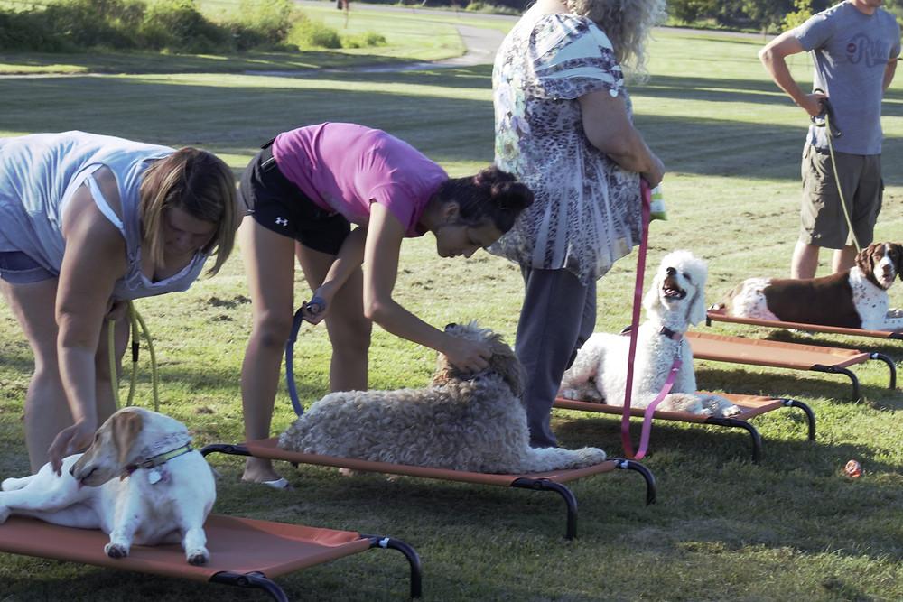 Dog Training Cedar Rapids, Pet Training Cedar Rapids, Digging Dogs, Stop digging dog, group class, dog cot, place training