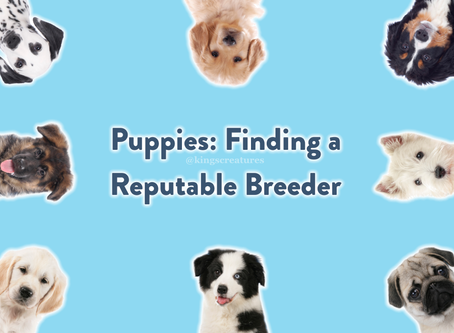 Puppies: Finding a Reputable Breeder