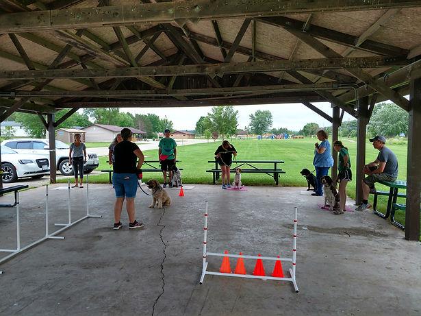 Dog Training Cedar Rapids, Pet Training Cedar Rapids, Cat Training Cedar Rapids, Group Dog Classes
