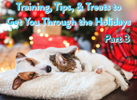 Training, Tips, & Treats to Get You Through the Holidays: Part 3