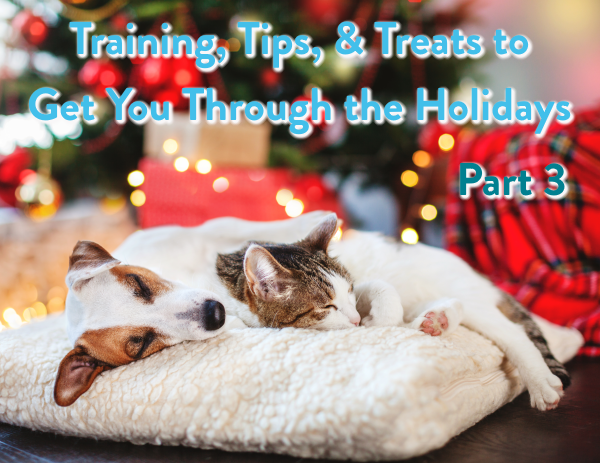 Dog Training Cedar Rapids, Cat Training Cedar Rapids, Holiday Pets, Holiday Dog, Holiday Cat, Cedar Rapids, Iowa, King's Creatures Animal Training LLC