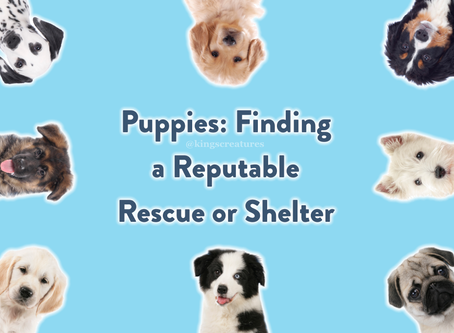 Puppies: Finding a Reputable Shelter or Rescue