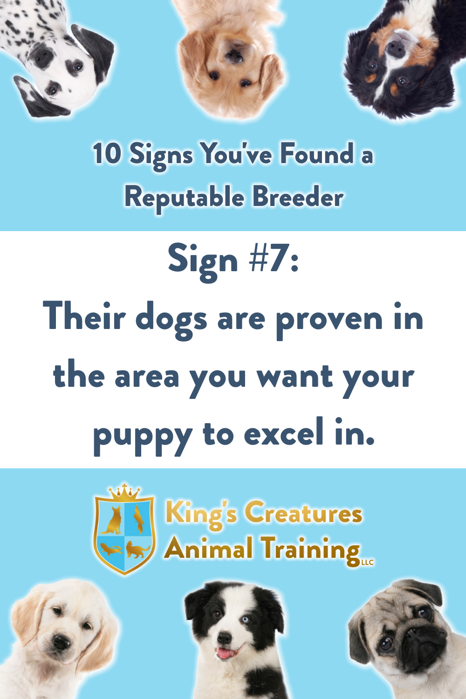 Dog Training Cedar Rapids, Reputable Breeder, Puppy, Find a Puppy, Breeder, Dog Trainer, King's Creatures Animal Training LLC