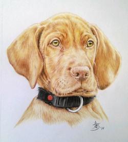 Pet drawing