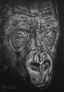 gorilla4_edited