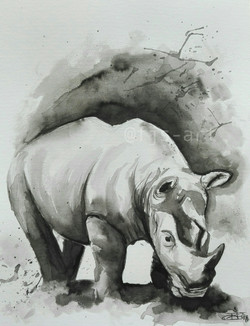 Rhino in a splash