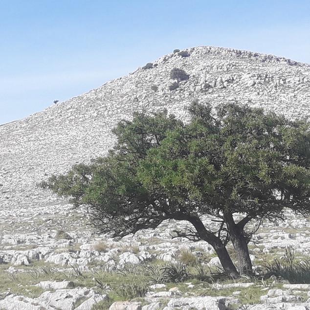 Prvomajski Kornati - planinska pot